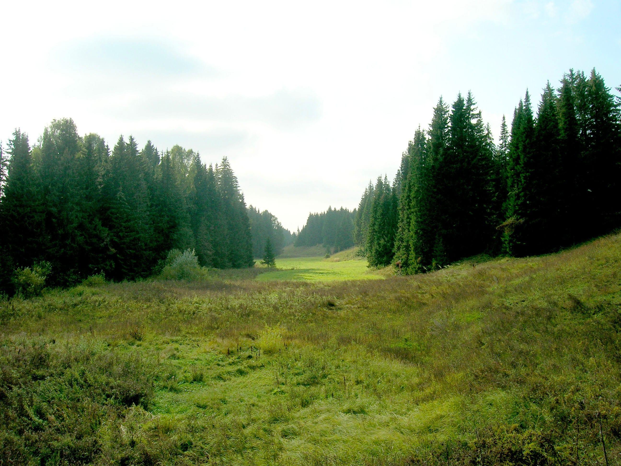 Carpathian woods
