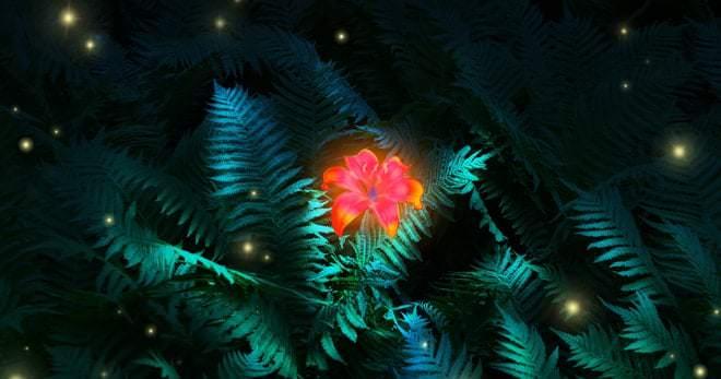 Мифический цветок папоротника