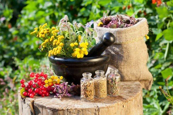 Лекарственные растения Карпат