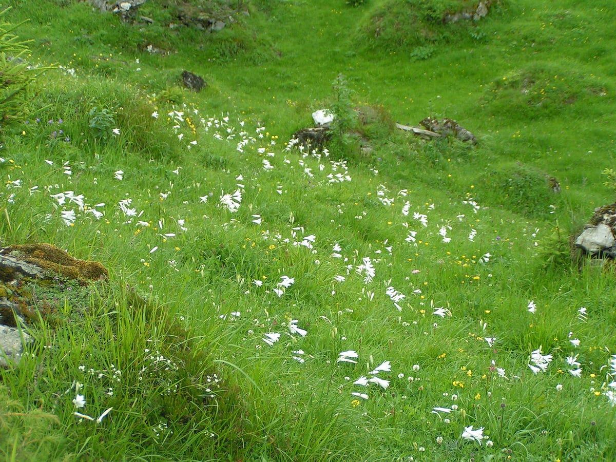 Субальпийские растения