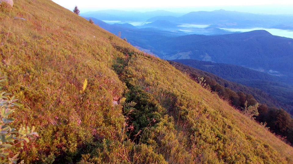 Флора Карпатских гор