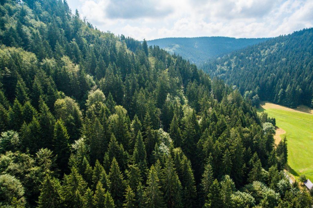 Лес возле с. Татаров