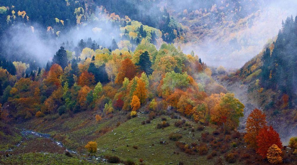 Карпатские горы пейзаж