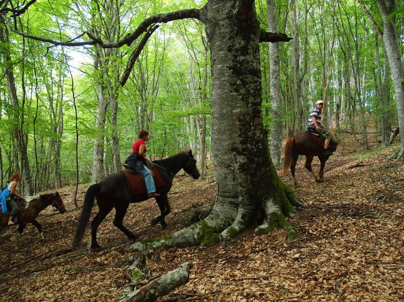 Катание верхом на лошадях в Карпатах